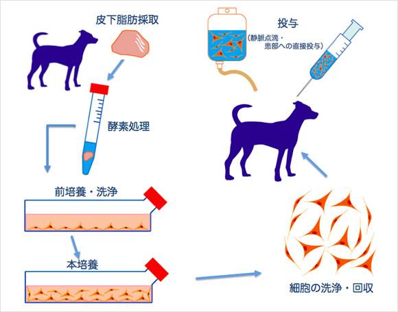 脂肪幹細胞療法(ADSC療法)