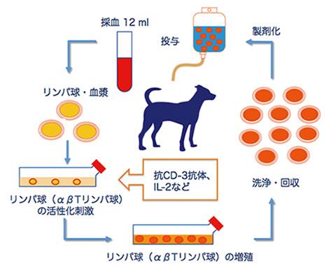 活性化リンパ球(CAT)療法