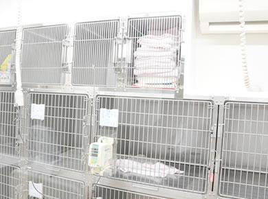 空調管理と清潔なケージ